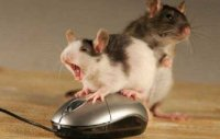 Компьютерная мышь пошла на пятый десяток
