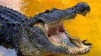 Чем крокодил отличается от аллигатора?