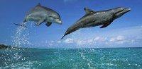 Загадочные дельфины