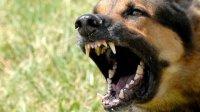 Что делать, если нападает собака