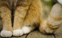 Кошачьи повадки, что они означают