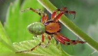 Полезные хищники пауки