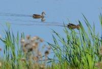 Земноводные и птицы как источники пищи в условиях выживания.