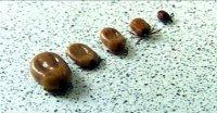 Клещи: какую опасность таят в себе эти паразиты?