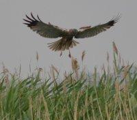 Фотографирование птиц